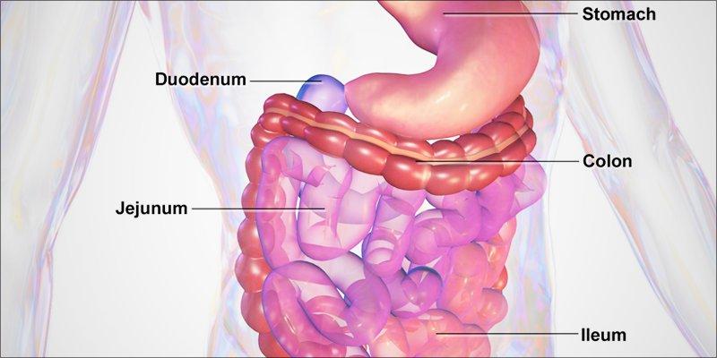 علت و علائم اختلال دستگاه گوارش