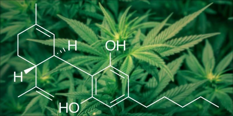 ترکیبات شیمیایی روغن شاهدانه