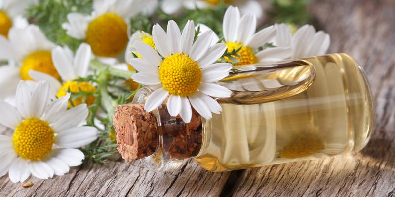 بابونه-درمان خانگی استرس