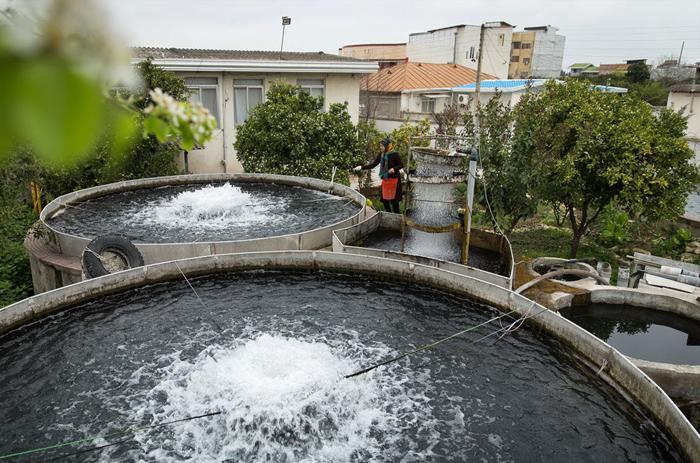پرورش قزل آلا در ایران