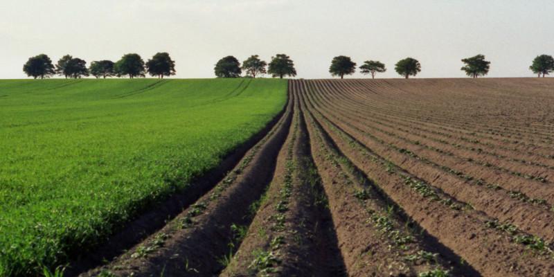 بخش کشاورزی، بزرگترین مصرف کننده آب در کشور