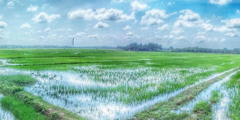 مصرف زیاد آب در بخش کشاورزی