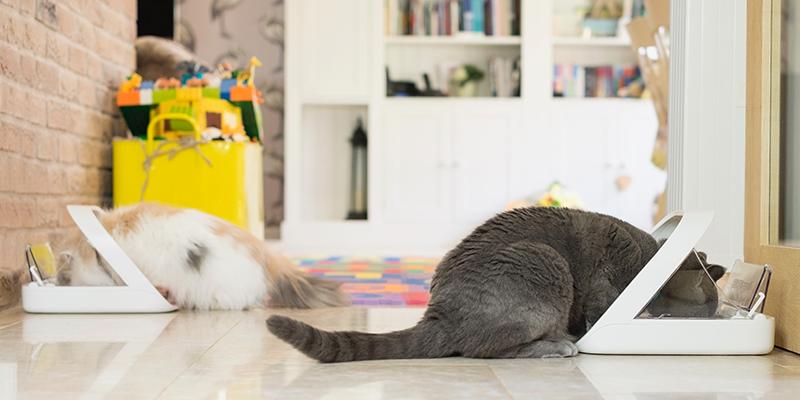 بازی کردن و سرگرم شدن با حیوانات خانگی