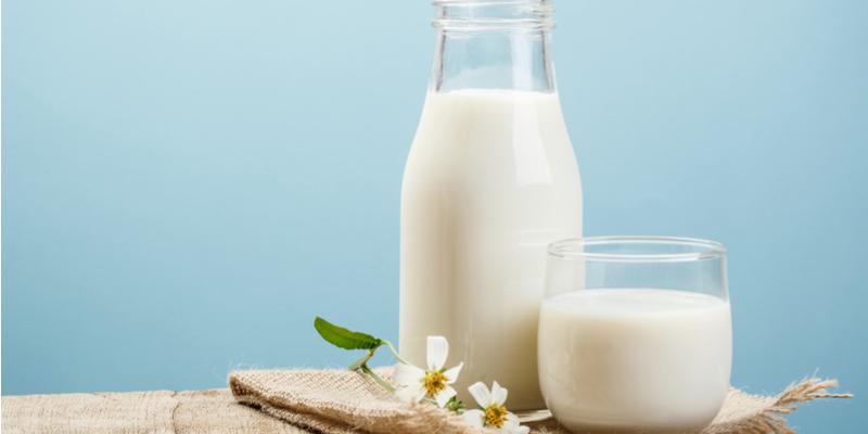 خواص شیر شتر