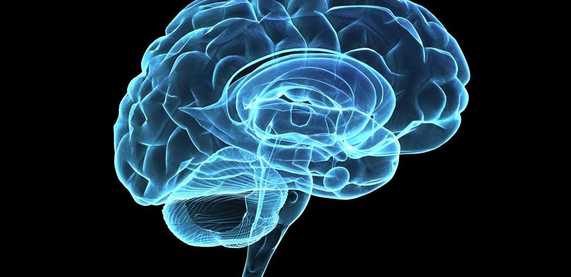 تعیین میزان هوش افراد با اسکن مغزی