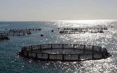 پرورش ماهی قزل آلا در سواحل محصور